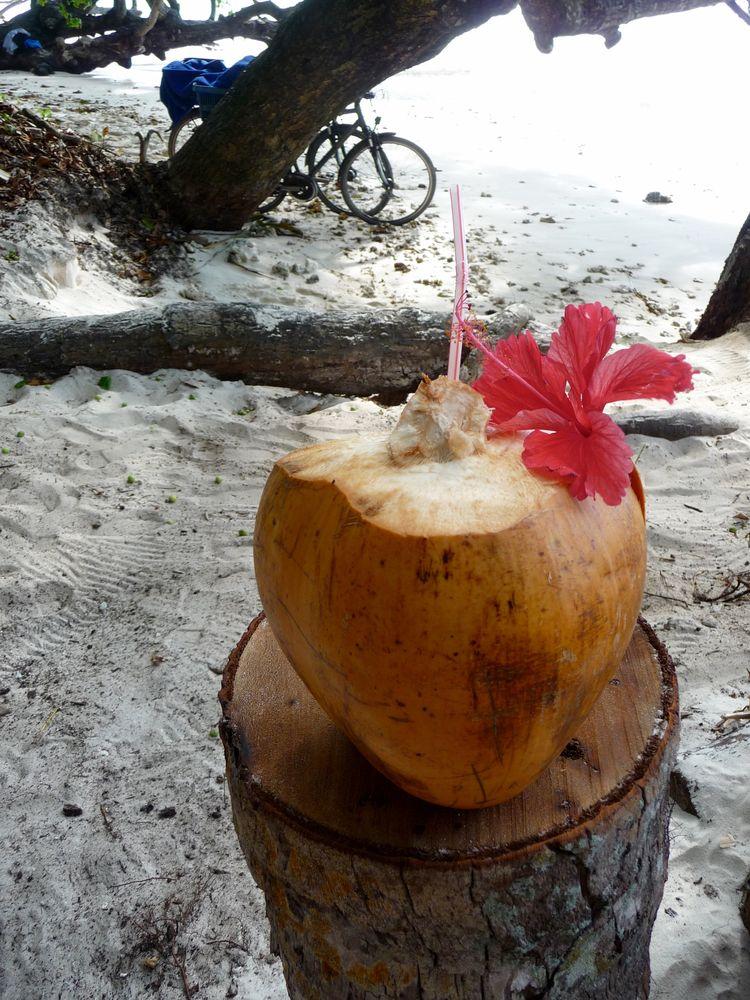 frische kokosnuss am strand kokosnuss gesund. Black Bedroom Furniture Sets. Home Design Ideas