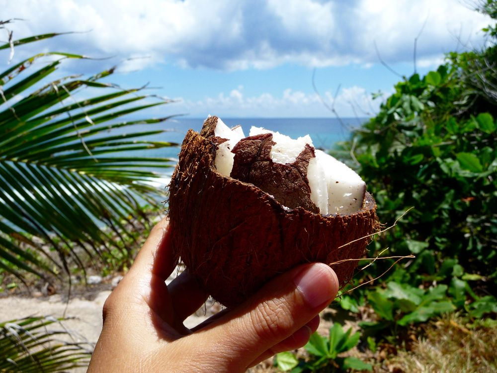 ber kokosn sse mich und f r dich kokosnuss gesund lecker. Black Bedroom Furniture Sets. Home Design Ideas